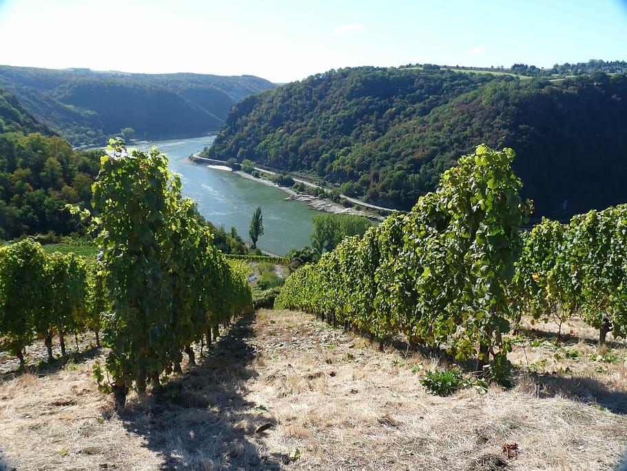 wine-rheingau-vineyard-landscape